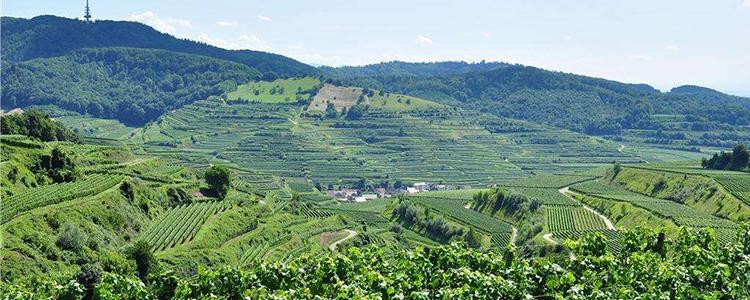如何实现农业与社会的可持续发展,让有机肥物尽其用