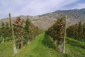 果树与土壤
