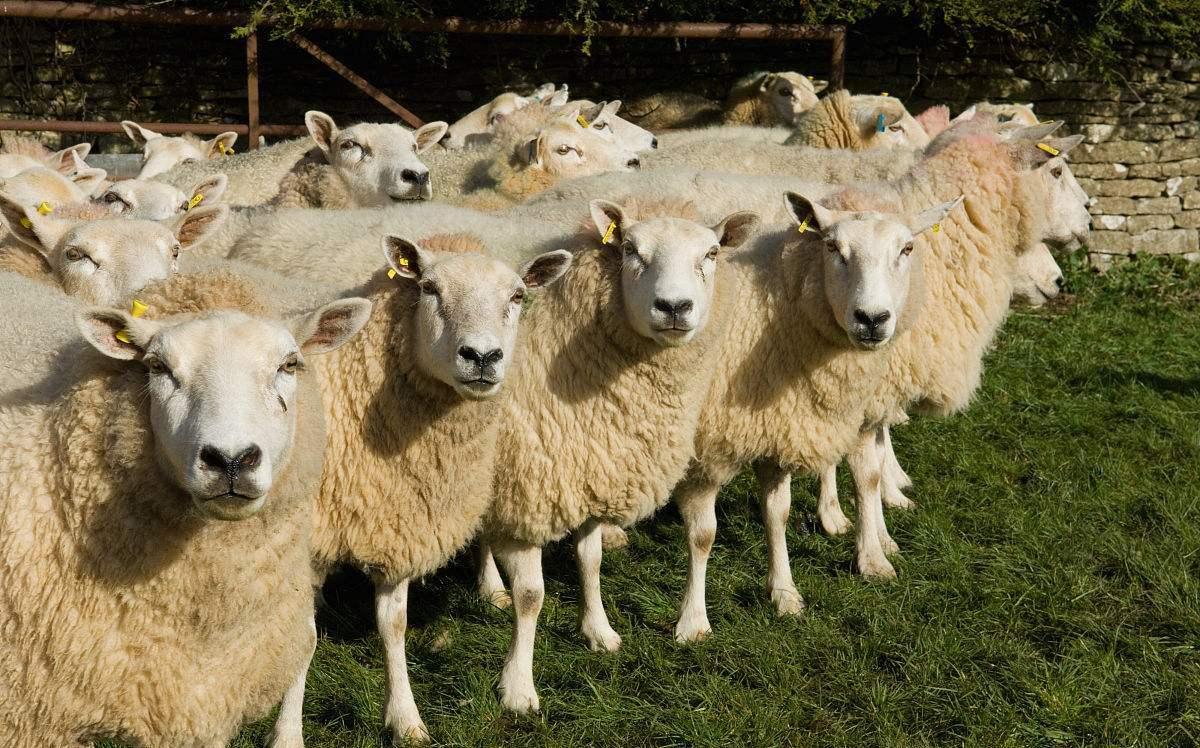 盘点羊粪发酵有机肥的六大作用