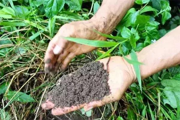 生态农业产量高
