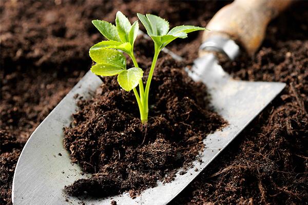 自制营养土,这是种花的最佳土壤选择!