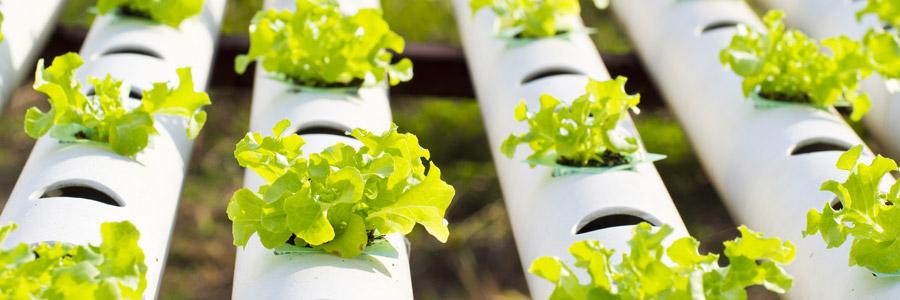 浅谈无土栽培有哪些优点?