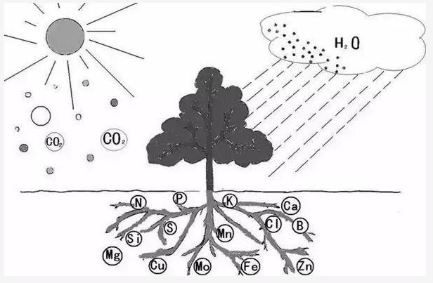果树的整形修剪十大基础原理!