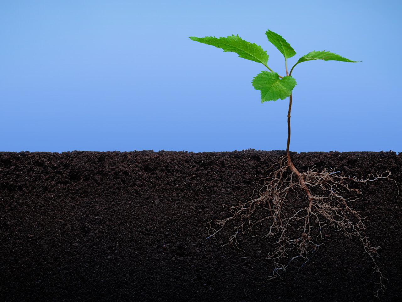 微生物有机肥如何正确使用?