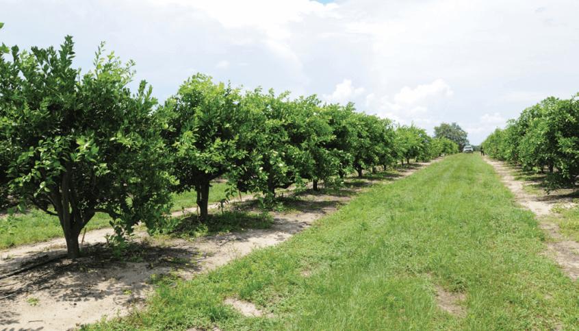 柑橘冬季管理技术指南