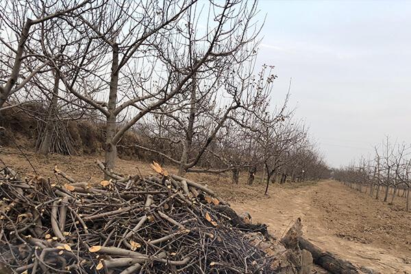乡村废弃的优质有机肥_农业废弃树枝