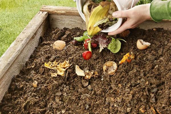 什么是蚯蚓有机肥,我们如何开始?