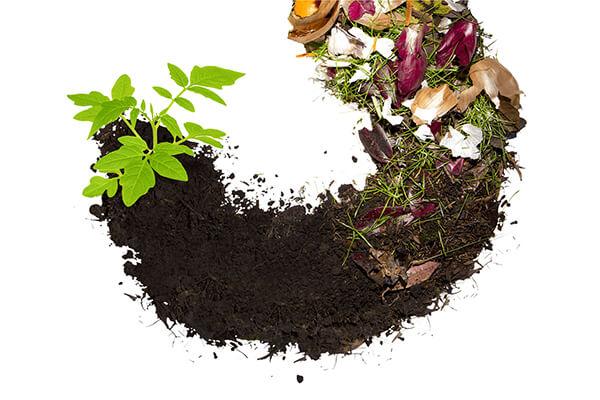 堆肥掌握这几点,以后不用买肥料!