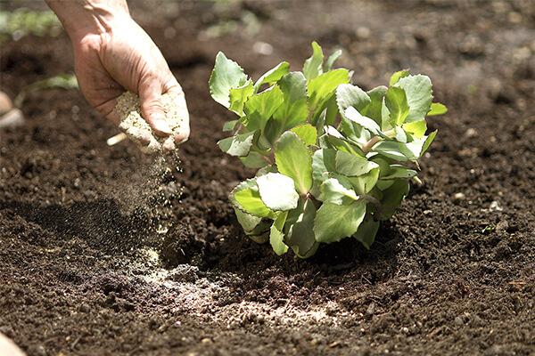 有机肥、微生物菌剂、生物有机肥、复合微生物肥,你分得清吗?