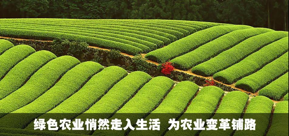 中国农业农村部:明年种植业重点要干5件大事!