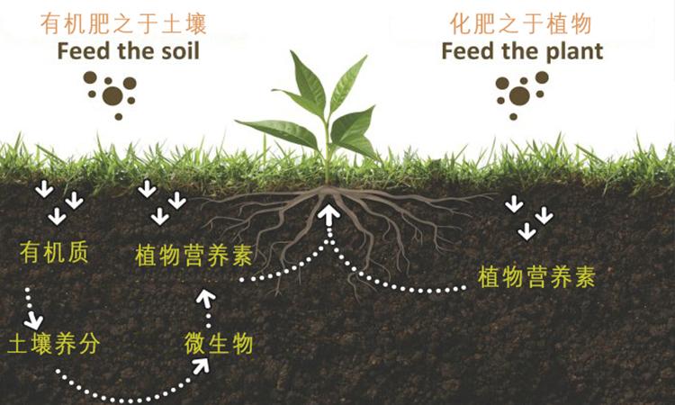 春季施用有机肥得注意什么?
