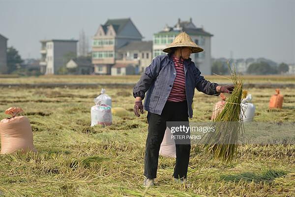 农民在改革的时代背景下更要抓住机遇,尤其这5条出路可以选择!
