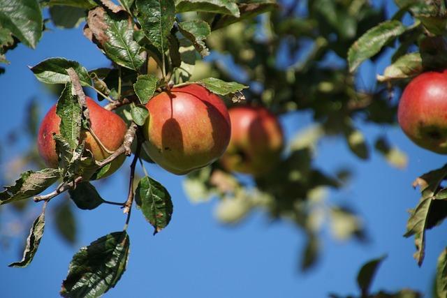 如何提高果园土壤肥力?掌握这几个方法!