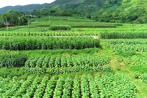 生态农业能够生产足够的食物!