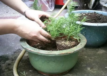 春暖花开好时节,如何给盆栽施营养土注意这几点!