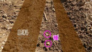 有机肥用量_有机肥