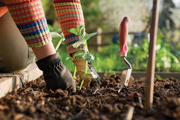那些有机肥营养土可以拿来种植花卉,请说明下?