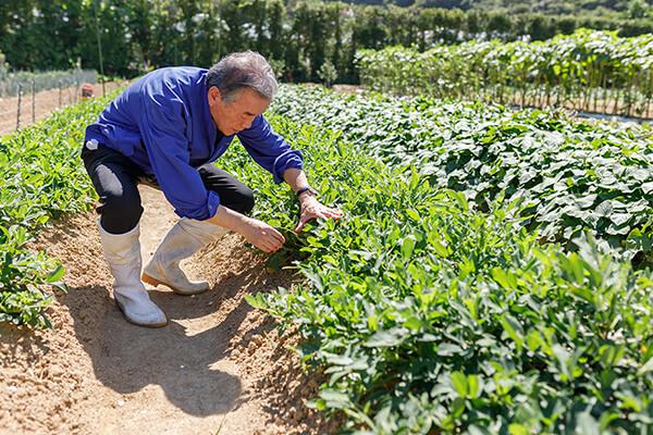 种植过程中得了根腐病可以用菌肥吗