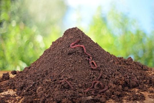 蚯蚓粪_蚯蚓粪有机肥