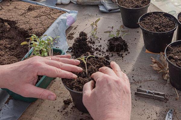 哪些材料可以配置营养土?